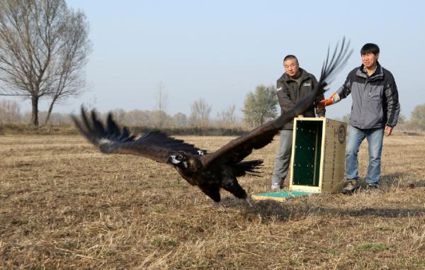 每年,近4000只野生动物来到北京这个院子里
